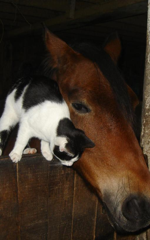 cat and pony